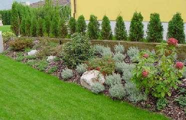 Nuova conformazione del terreno per la creazione di una for Arbusti da siepe